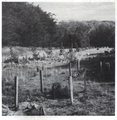 walnut trial Orton Bradley Park 1985 pic 1