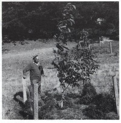 walnut trial Orton Bradley Park 1985